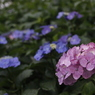 花 その32