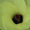 あまり注目されることのない花たち