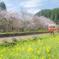 春色の汽車3
