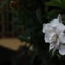 花 その34
