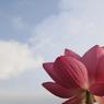 花 その36