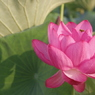 花 その39