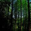 水上の樹木