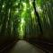 嵯峨野・竹林の道