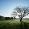 草原の朝 7