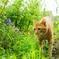 公園の猫 3