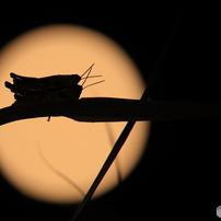 月夜の生き物たち