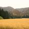 山の田の秋