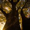 紅葉と秋の空<1>