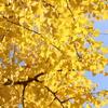 秋の黄金色