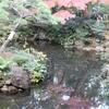 殿ヶ谷戸庭園 秋 池1