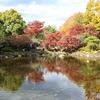 府中の森公園 池2