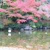 府中の森公園 池3
