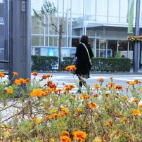 花のある町