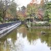 江戸東京たてもの園 池2