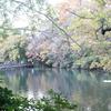 井の頭公園 池2