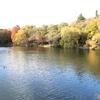 井の頭公園 池5