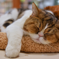 ゆっくり寝かせるニャ(=ω=)。・゜