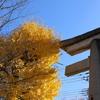 八坂の銀杏