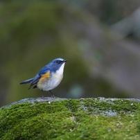 幸せの青い鳥。。。
