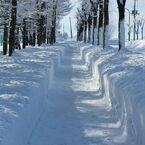 歩道も除雪