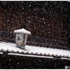 「みんな雪の中04」小江戸川越散歩142
