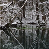 静謐の丸池様-8
