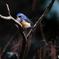 青い鳥を見つけたよ♪