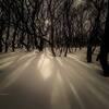 冬の木漏れ日☀