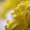 祖母を思い出す花