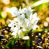 光きらめく春..