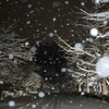 雪のイチョウ並木