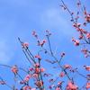 散歩道にも梅が咲いてる~♬