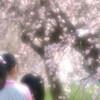 春が来た⑤