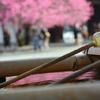 興正寺手水舎と紅梅
