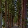 立山寺 栂並木