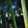 次はプチ竹林へ・・