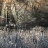 白い森の目覚め