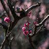 古木に春がやってきた・・