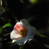 春来の彩り…2
