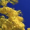 黄色と青色