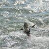 波に脚を取られそう   DSC_2555