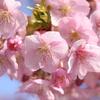 桜3018