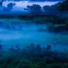 幽玄なる湿原