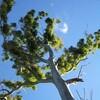 穢れのない青い空 (オーストラリアの森の中で 3)