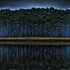 Doubtful forest