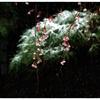 「小さな季節感」 小江戸川越散歩154