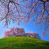 古墳に咲く桜