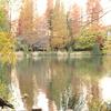 紅葉と池とカラス