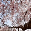 桜 part1